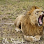 Profile image of tour guide Maasai African Safaris