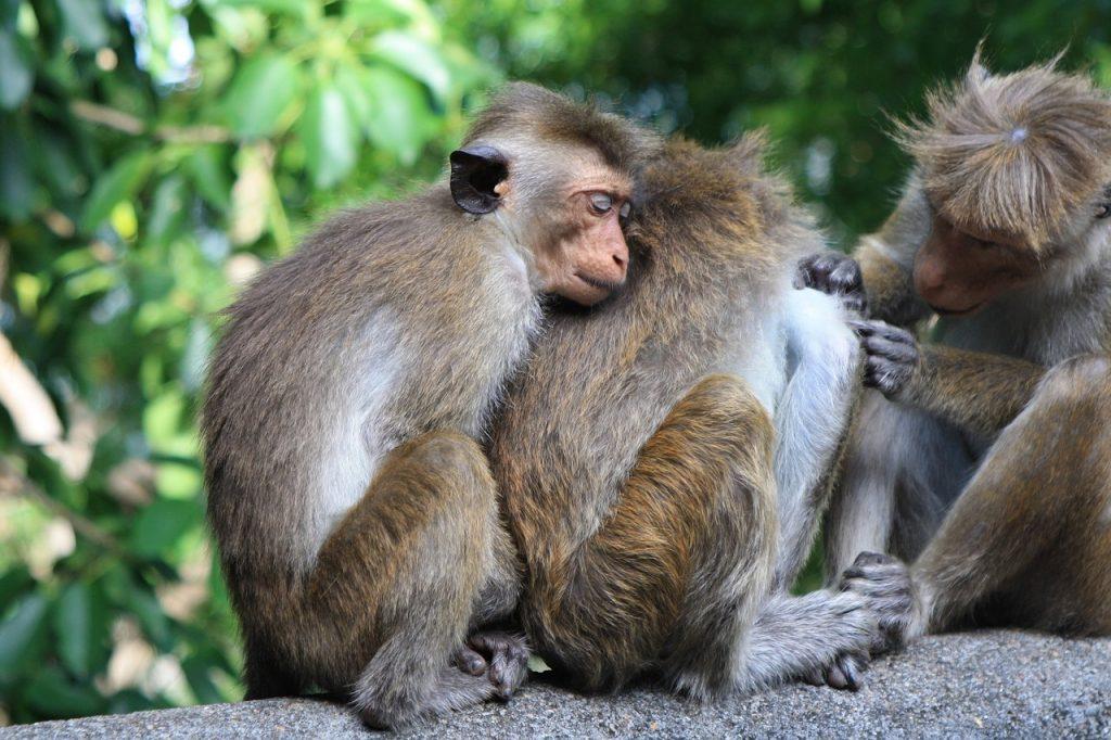monkey-2360018_1280